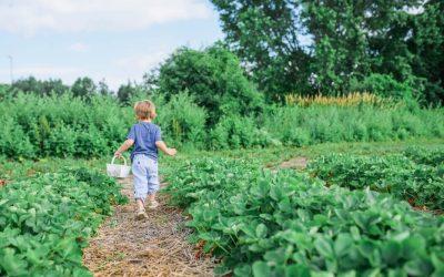 Coltivate l'orto con i vostri bambini